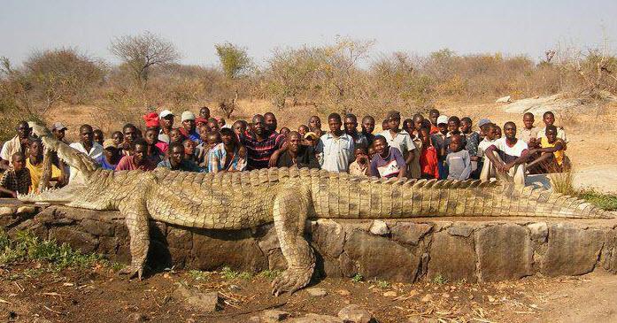 [Image: 22-foot-croc1.jpg]