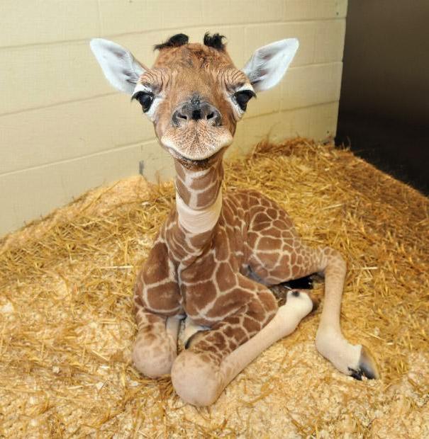 http://tkcollier.files.wordpress.com/2012/12/cute-baby-animals-2.jpg