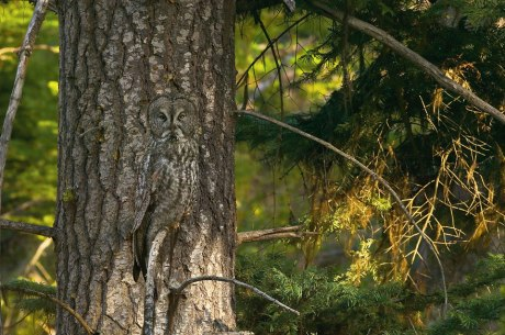 animal-camouflage-photography-art-wolfe-1