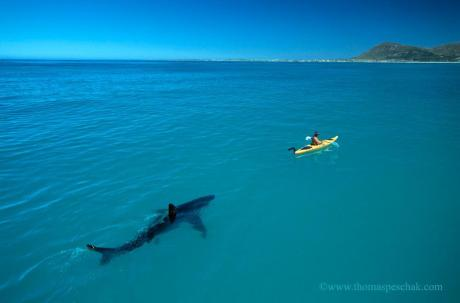 Great White and Kayak
